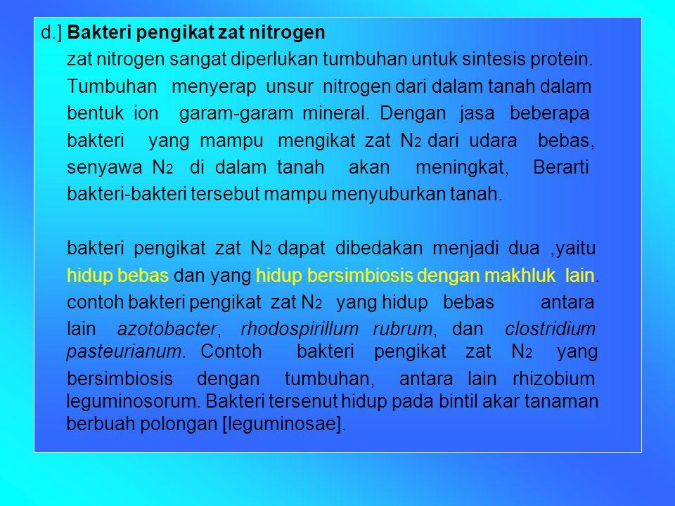 d.] Bakteri pengikat zat nitrogen